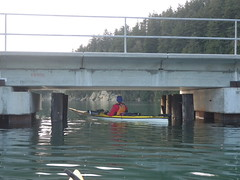 King Tide Mud Bay Paddle 012