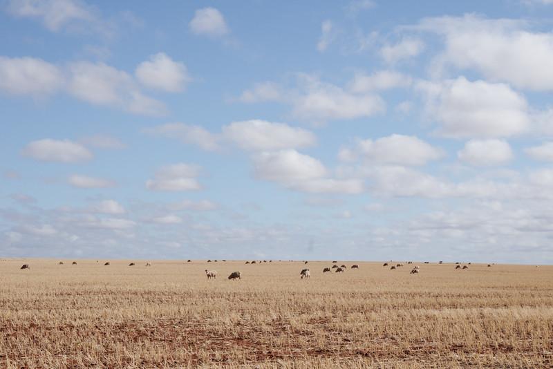 Wheatbelt, Western Australia