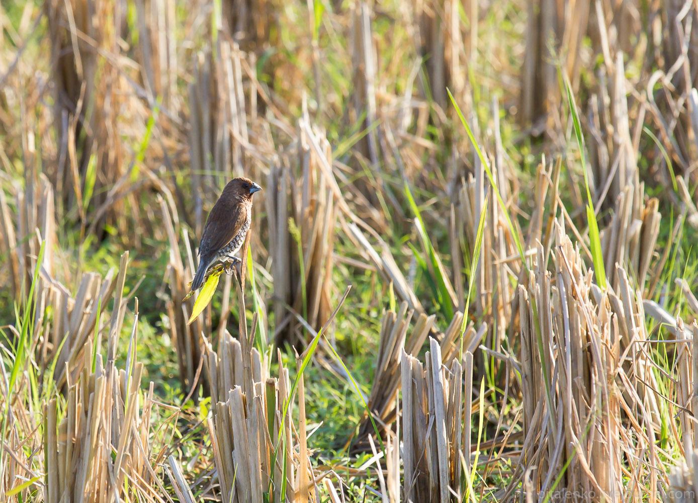 Птички помогают собрать урожай
