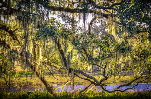 trees florida places liveoak spanishmoss hdr highdynamicrange dadecity