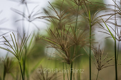 Impressionistic View of Seed Heads in Hawai'i Volcanoes National Park