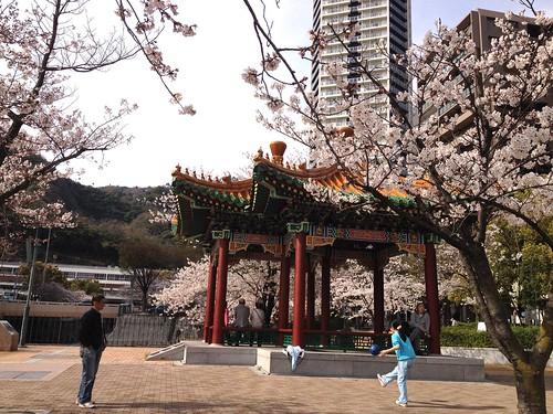 2014桜巡り