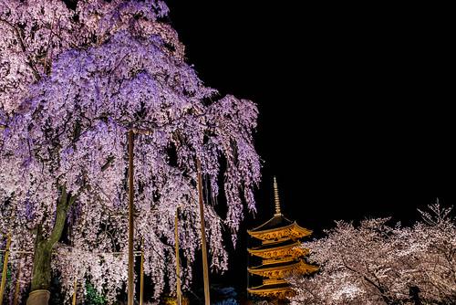 toji temple,kyoto