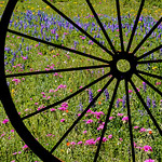 Texas_Wildflowers_selects