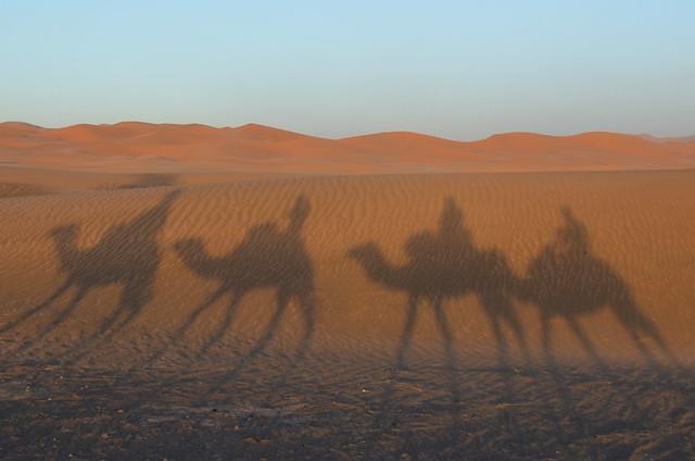 Sombra de camellos