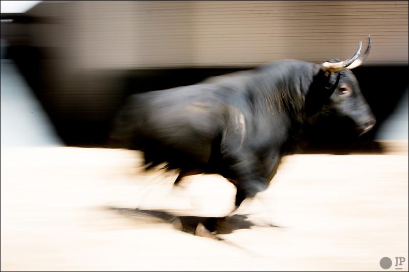 toro-barrido