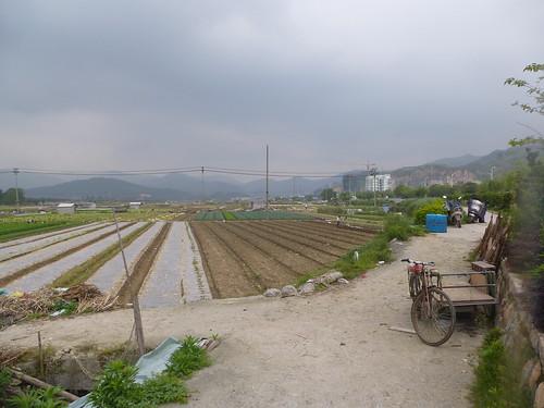 Fujian-Xiapu-Champs (4)