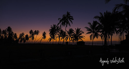 sunset colour sunrise palm oman salalah