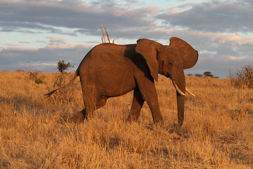 africa sunset elephant nature canon tanzania wildlife tarangirenationalpark faunainmotion naturelover2007