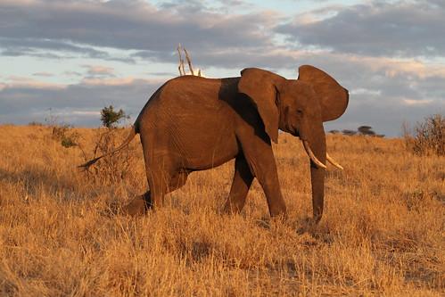 africa sunset elephant nature canon tanzania wildlife tarangirenationalpark faunainmotion naturelover2007