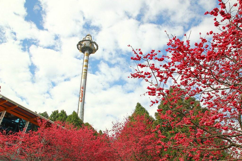 九族櫻花祭 (132)