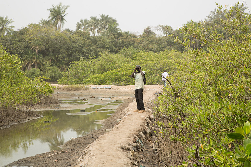 Path to the golf course. Kotu,Gambia