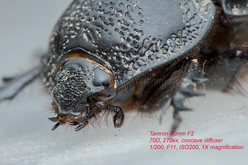 Tamron 60 1X mag_MG_6539