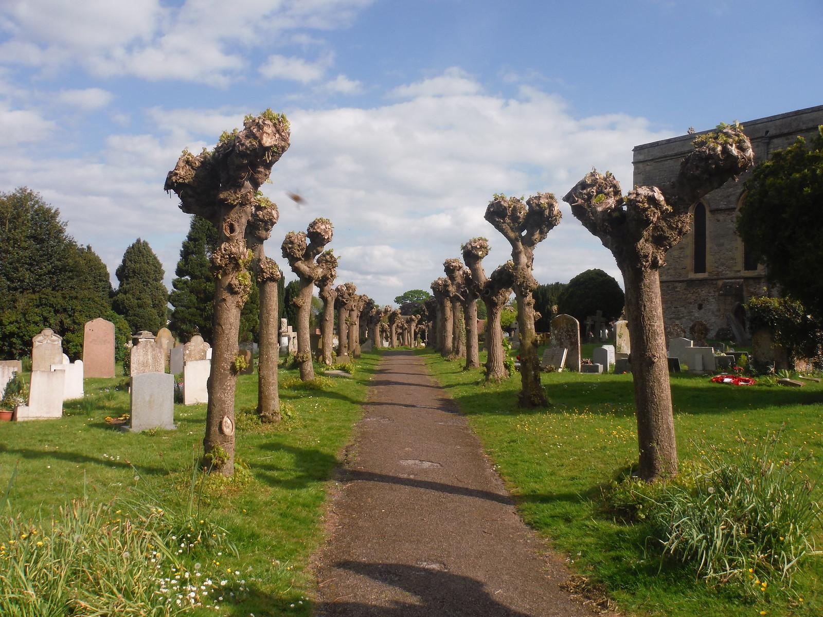 Churchyard of St. Mary the Virgin, Thame SWC Walk 190 - Thame Circular