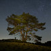 The lonesome tree of Maasduinen