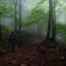 Perdidos ... En un bosque Navarrico by atvjavi