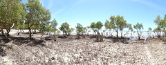 HD Panorama, Mangroves Along Beach, Vilanculos, Mozambique