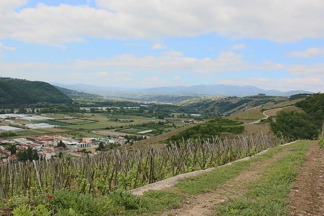 Côtes Rôties