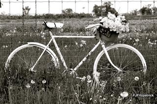 BikeMemorial