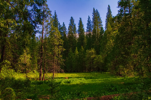 california northerncalifornia landscape spring meadow marsh springtime mountainmeadow placercounty sierranevadarange emigrantgap discoverytrail canon7d bowmanlakeroad canon1585mmusmis lightroom4 topazsw