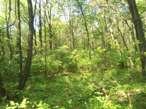 illinois spring may trace godfrey savanna