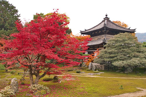 【写真】紅葉 : 鹿王院