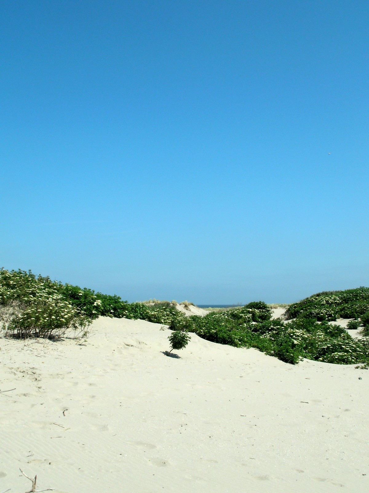 A view of the green vegetation and pale yellow sand at Hoek van Holland.