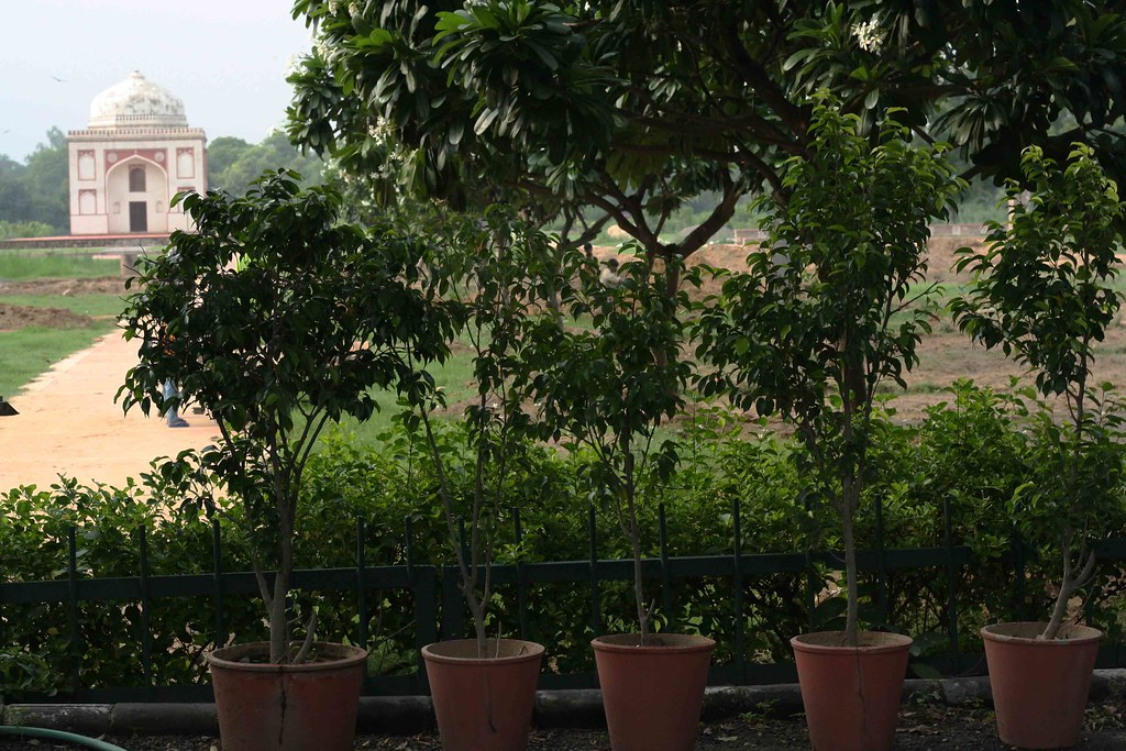 City Hangout – Sunder Nursery, Mathura Road