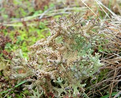 Lovely lichen