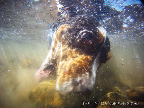 GoPro Under Water-6129