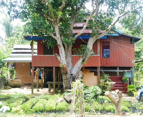 Sulawesi13-Bira-Bone-Kijang (13)
