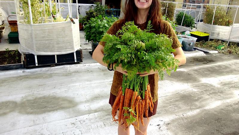 Weekly HarvestWP_20130728_016