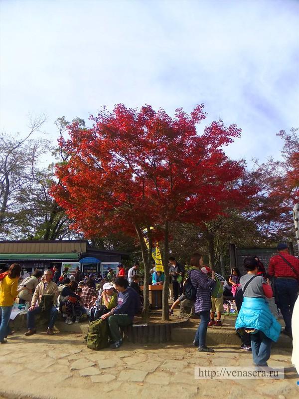 Гора Такао - Вершина