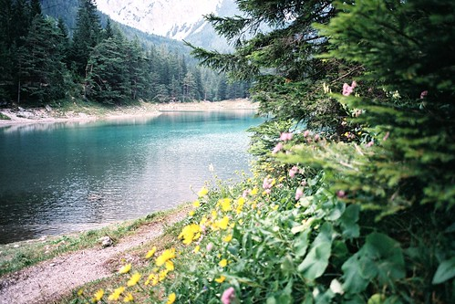 flowers trees lake mountains green film nature water analog walking austria bush minoltax700 greenlake fujifilm paths hiding steiermark styria österreich grünersee