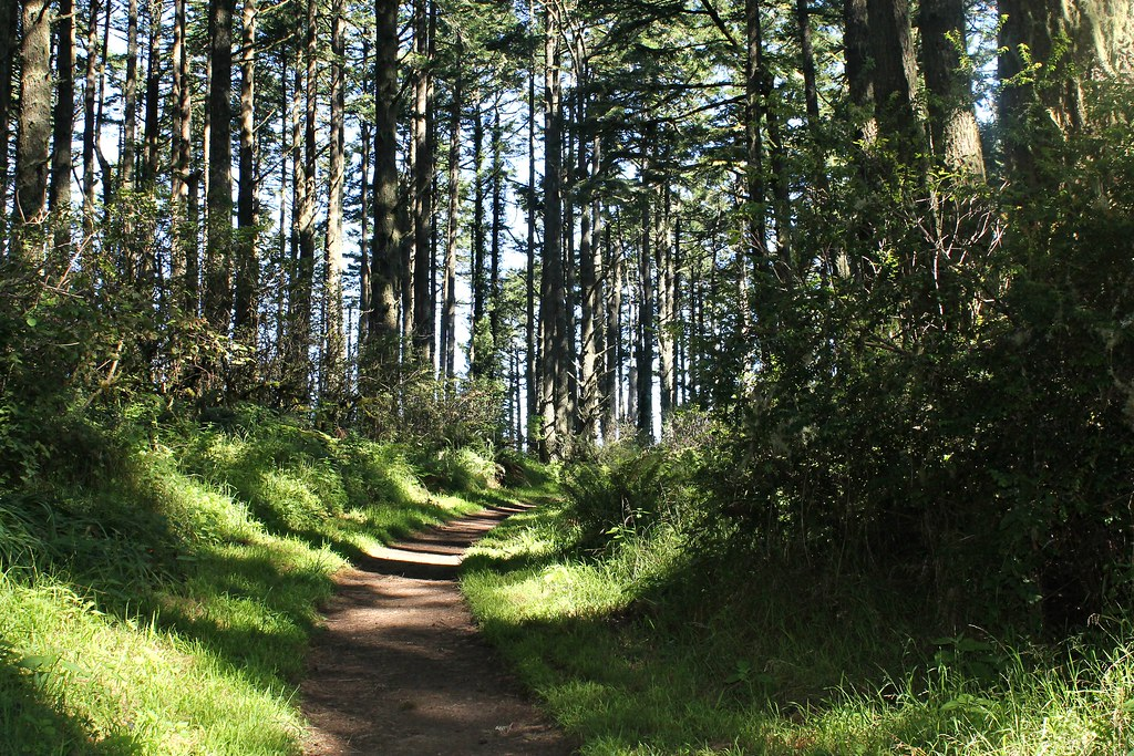 2013 Vac - Point Reyes Trail - Forest