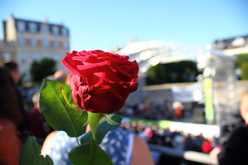 Rose in a Summer Concert