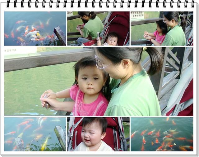 水里車埕溜小孩餵魚趣