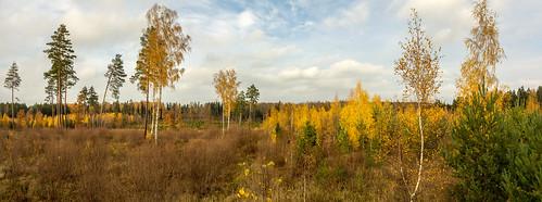 autumn panorama rudens