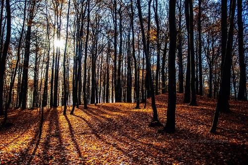 november autumn trees light shadow sun tree nature colors leaves norway forest landscape norge leaf woods natur nopeople autumncolors tre beech landskap trær larvik vestfold løv beechforest canon5dmarkii autumnphotography