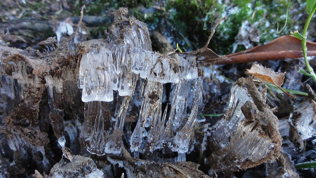 Needle ice that's formed little spikes, with another tier growing on the spike. Wowsa.