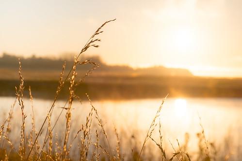 morning grass grasses fujixe1