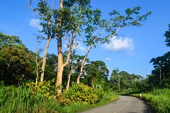 Roads of Woleu-Ntem, Gabon