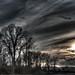 IMGP1309ed.jpg by lizterese