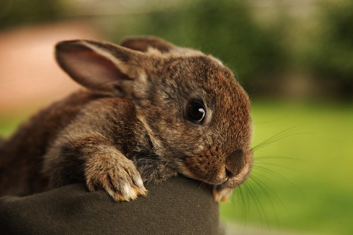 Flickr_bunny_7