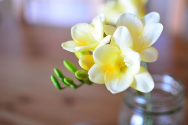 Freesias from the garden
