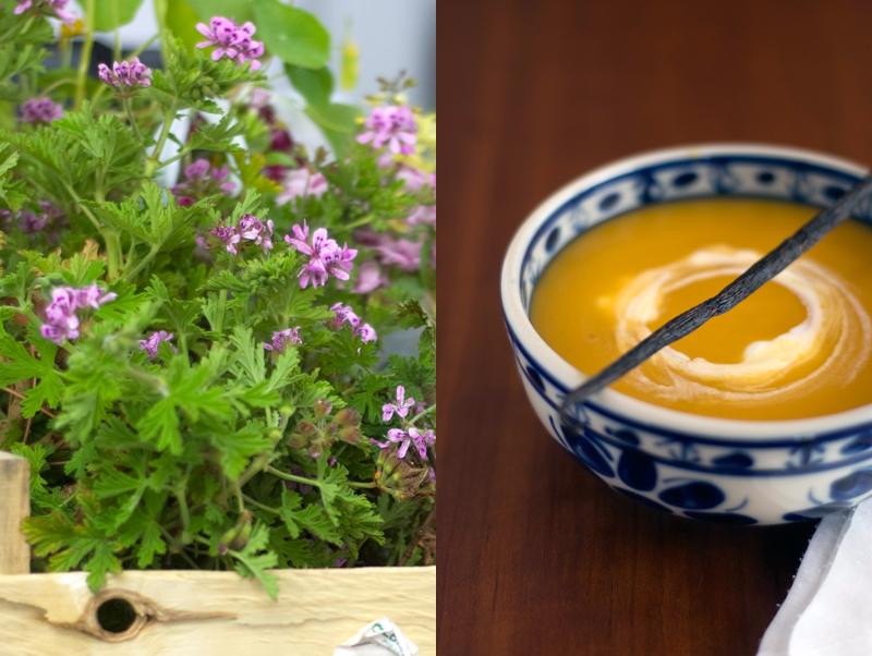 Sopa de cenoura, coco e baunilha
