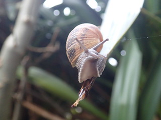 snail in my garden