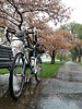 Petals and puddles this morning in #bikedc.  @30daysofbiking