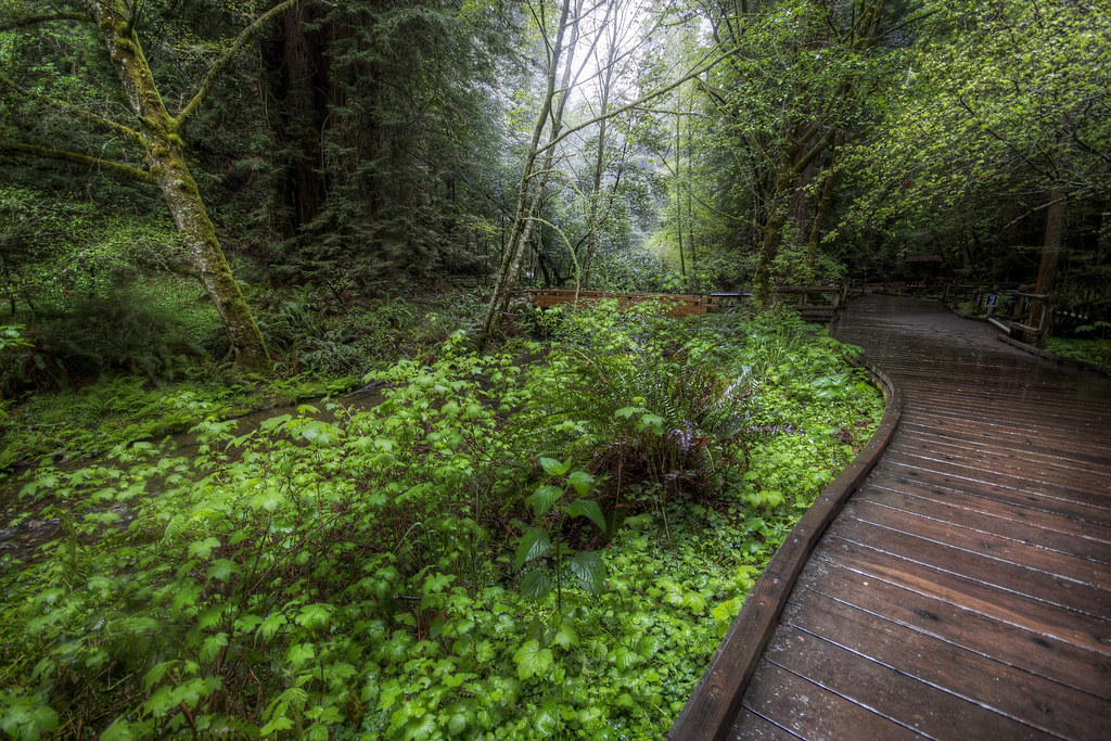 Muir Woods Has Wood Pathways