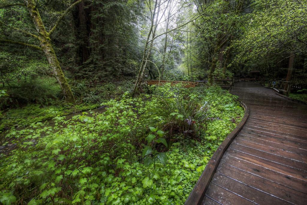 Muir Woods Has Wood Pathways